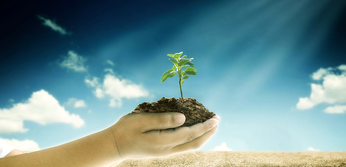 Bilderesultat for bærekraftig mat og matproduksjon